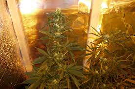 It's Laborious Sufficient To Do Rise - It Is Also More Durable To Do CBD Maker
